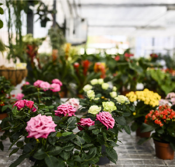 gardeniers-home-flores-2x